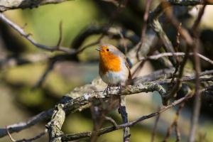 robin free domain